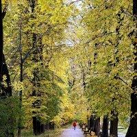 Золотая осень ... :: Лариса Корженевская