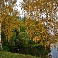 Золотое украшение хмурого, осеннего дня. :: Алла Кочергина