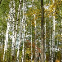 Сентябрьский лес :: Ольга