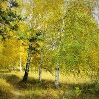 Осень-золотая пора. :: Valentina