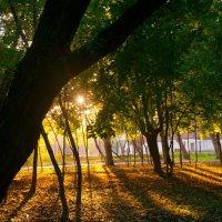 Осенний вечер в парке :: Albina