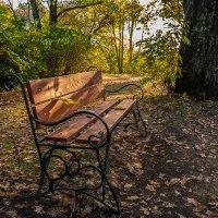 Осеннее: скамейка под старым дубом :: Андрей Поляков