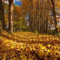 Листья жёлтые,скажите,что вам снится...© :: Roman Lunin