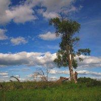 Одинокое древо :: Павел Зюзин