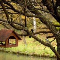 Осенние птички :: Александр Аполонов