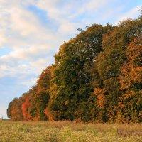 осенние полевые деревья :: Евгений