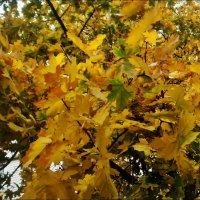 Солнечные листья :: Нина Корешкова