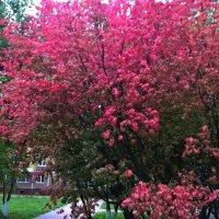 Вот такое осеннее дерево :: Елена Семигина