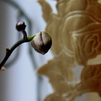 просто бутончик  орхидеи.. :: Валерия  Полещикова