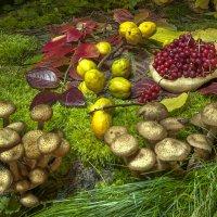 Натюрморт с опятами и лимонником на пне... :: Ольга Дядченко