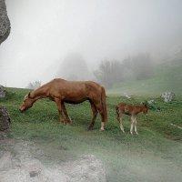 Туманное утро в горах :: Ольга