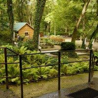 Заповедный парк :: Наталия Сарана