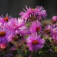 Последние цветы осени, так же как и самые первые весенние, особенно радуют нас… :: Людмила Василькова