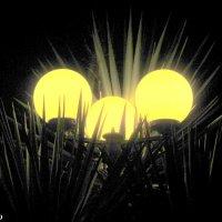 Вечерние фонари :: Нина Бутко