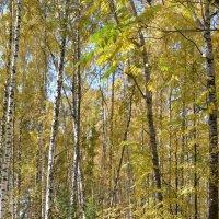 Осенний лес :: grovs