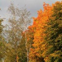 Вот и Осень! :: Paparazzi