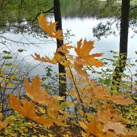 Осенние зарисовки :: Лидия (naum.lidiya)