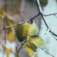 Осенние краски :: Маргарита Б.