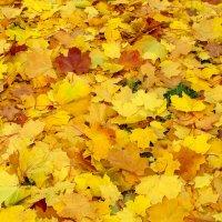 Листья падают... :: Александр Атаулин