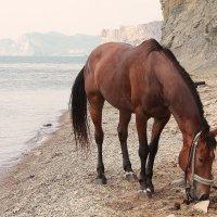 Лошадь у моря :: Марина
