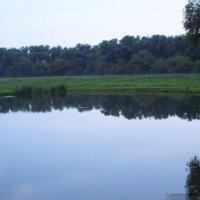 Дворянское гнездо:очарование леса :: Игорь Юсов