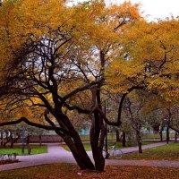 В осеннем парке(3) :: Vladimir Semenchukov