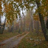 дорога в лес :: Седа Ковтун