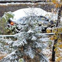 Выпал первый снег :: Domna Kuznechic