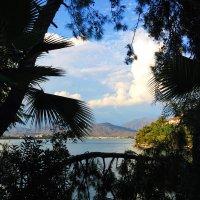 В обрамлении пальмовых листьев.. :: Anna Stepanyuk