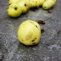 Яблоки на столе :: ArtNoirQ
