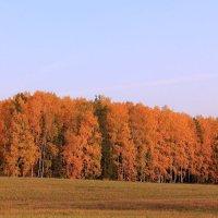 Осени краски :: Татьяна Ломтева