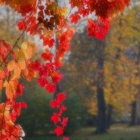 Пришла золотая осень. :: Юрий