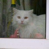 Ой, кто это за окном? :: Сергей Ткаченко