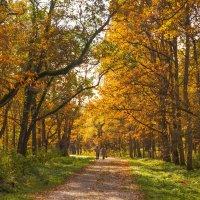 Осень на Тенистой аллее :: Виталий