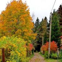 Осень на даче :: Светлана
