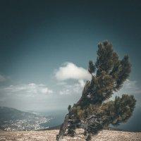 Сила ветра :: Роман Ткаченко