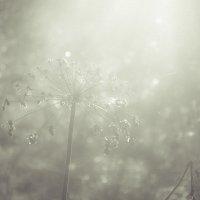 В тумане :: Олег Фиедориенко