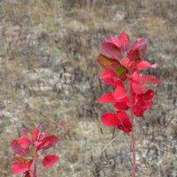 Красный октябрь :: Алексей Меринов