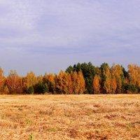 Осень :: Vladimir Smirnov