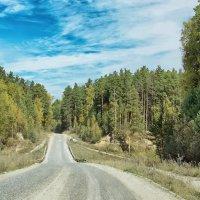 Дорога через лес :: Дмитрий Конев