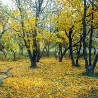 Осенний лес :: Вячеслав Баширов