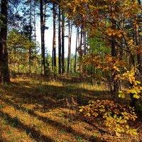 Запахло прелостью осенней... :: Лесо-Вед (Баранов)