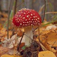 Красуется среди листвы :: Александр Смирнов