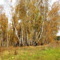 Осенняя полевая дорога. :: Борис Митрохин