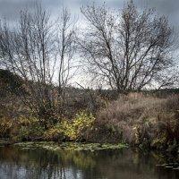 Осень.. :: Аркадий Шведов