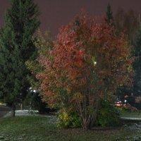 ночные краски осени... :: Alexandr Staroverov