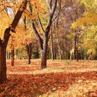 По ковру из желтых листьев :: Татьяна Ломтева