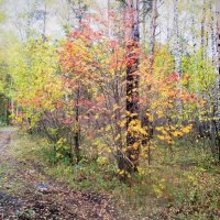 Осенний лес. :: Valentina