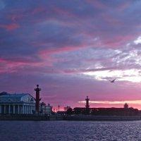 вечер над Невой :: Елена