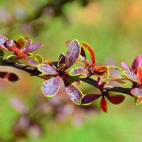Яркие листья. :: Оля Богданович